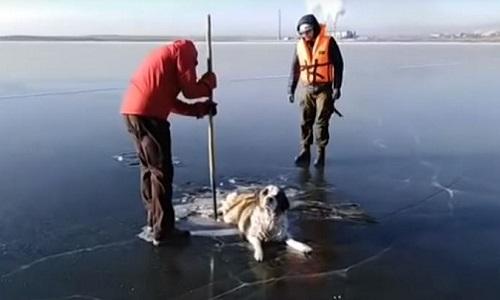 Giải cứu chó bị đông cứng trên mặt hồ đóng băng ở Siberia