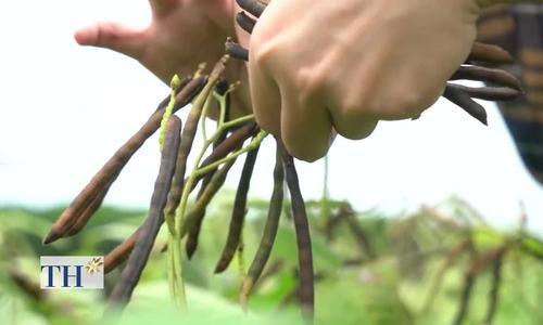 Bí quyết làm ngũ cốc dinh dưỡng từ hạt mầm của người Huế