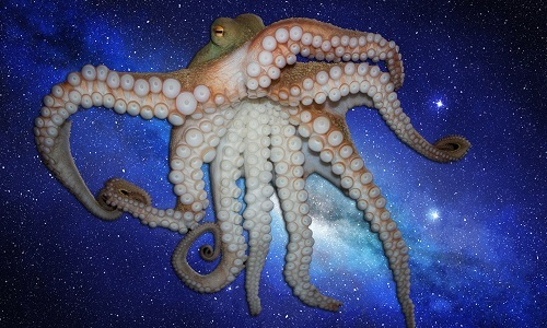 Đặc điểm khiến bạch tuộc bị nghi là sinh vật ngoài hành tinh