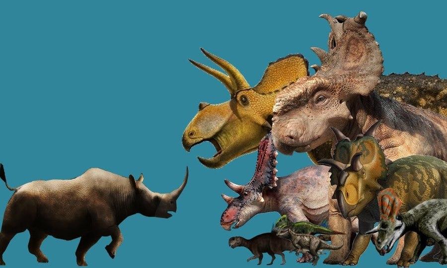 So sánh loài tê giác lớn nhất hiện nay với khủng long có sừng