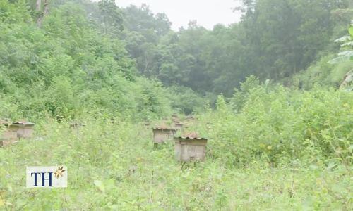 Độc đáo mật ong Ngũ Gia Bì có vị đắng hậu ở Lạng Sơn