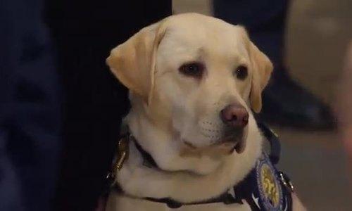 Chú chó Sully vĩnh biệt cố tổng thống Bush