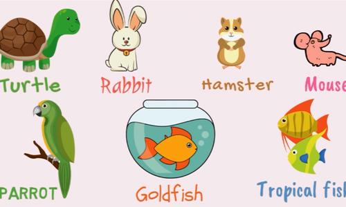 Tên gọi các loài vật nuôi trong tiếng Anh