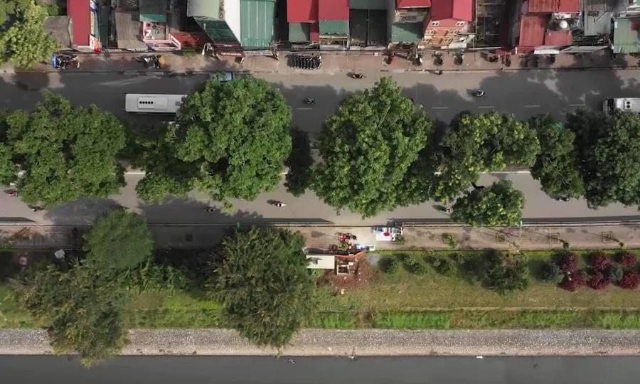500 cây xanh trên đường Láng trước ngày chặt hạ