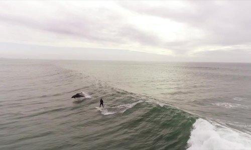 Đàn cá heo lướt sóng cùng người đi biển ở California