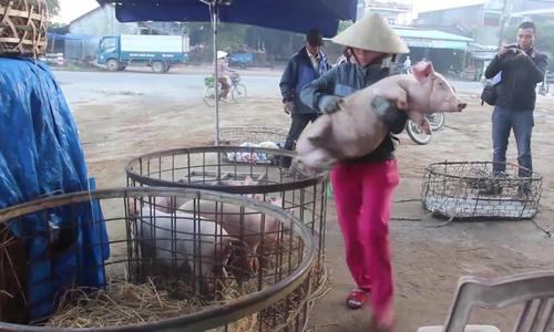 Chợ heo gần 50 năm ở Quảng Nam