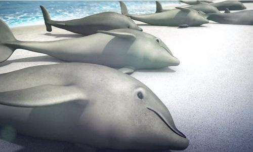 Thủ phạm khiến cá voi hoảng sợ tự sát tập thể