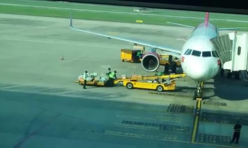 Hai nhân viên hàng không bốc hành lý bị kỷ luật