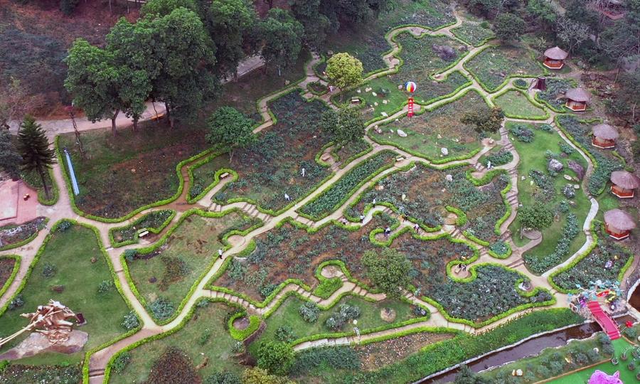 Vườn hồng 60 tỷ xác lập kỷ lục lớn nhất Việt Nam