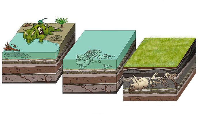 Quá trình hình thành hóa thạch trong tự nhiên