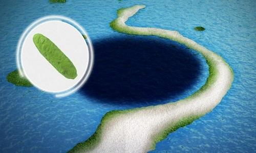 Phát hiện vi khuẩn ăn dầu ở rãnh đại dương sâu nhất thế giới