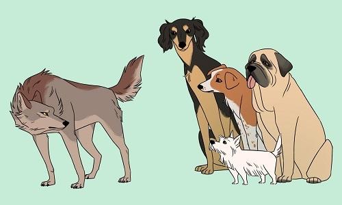 Quá trình thuần hóa chó sói thành chó nhà