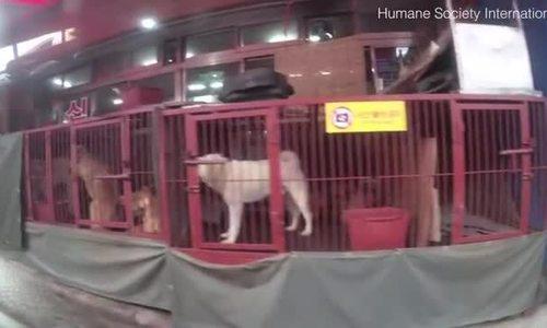 Chợ thịt chó gây tranh cãi ở Hàn Quốc bị đóng cửa