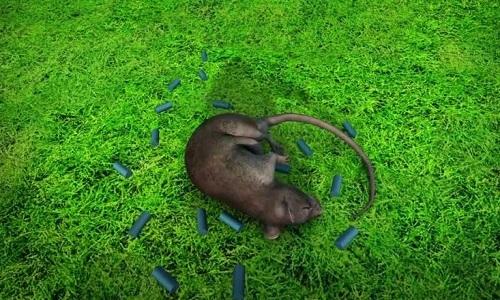 Kế hoạch diệt chuột bằng 1,5 tấn thuốc độc của Mỹ