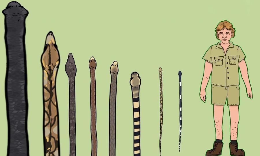 So sánh kích thước những loài rắn lớn nhất