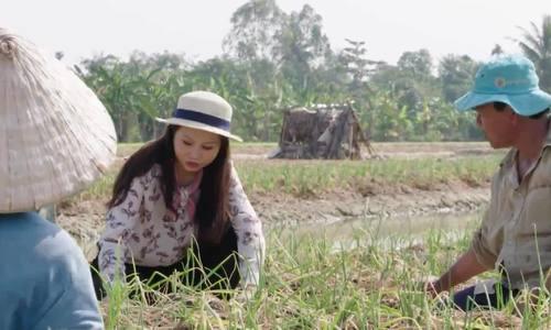 Quy trình trồng rau an toàn ở Vĩnh Long