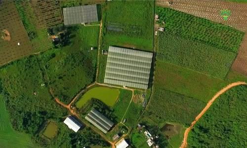 Công nghệ trồng cà chua bi trong nhà kính