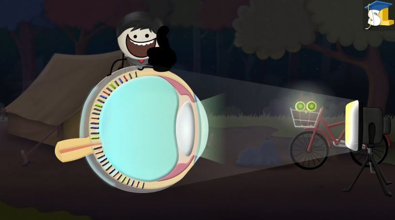 Lý do mắt một số loài động vật phát sáng trong đêm