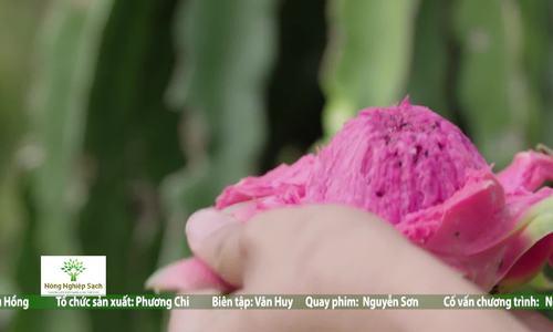 Thanh Long Trà Vinh