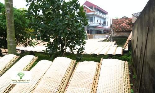 Kỹ thuật làm bánh đa nem làng Chều