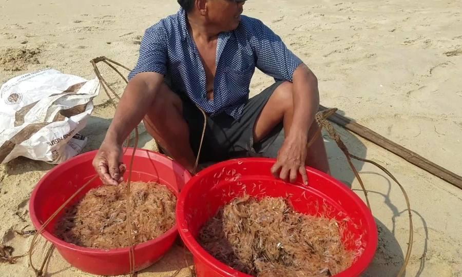 Ngư dân đánh bắt ruốc biển