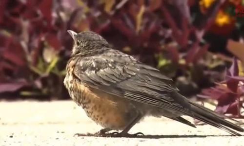 Khoảng khắc chim sẻ chết tự nhiên