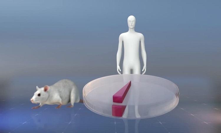 Tạo loài lai giữa người và chuột