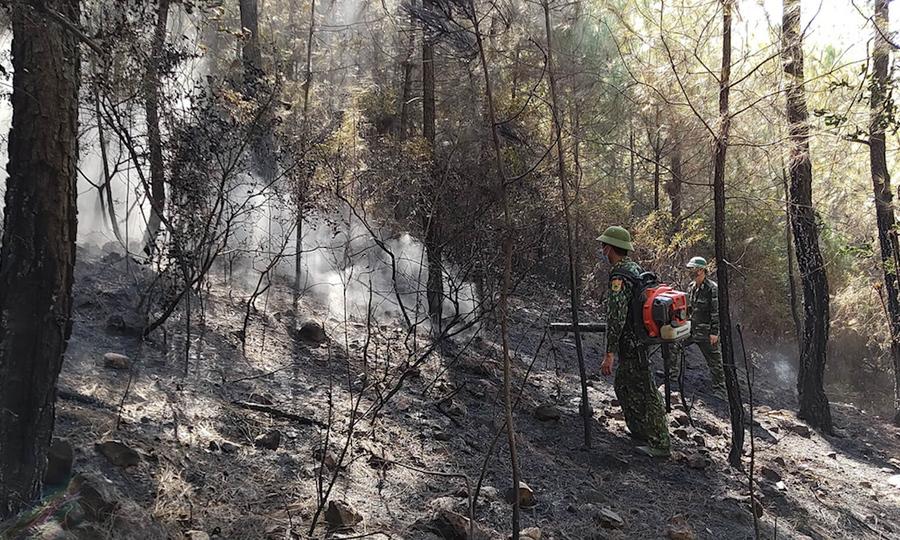 Rừng thông cháy rụi sau bão lửa
