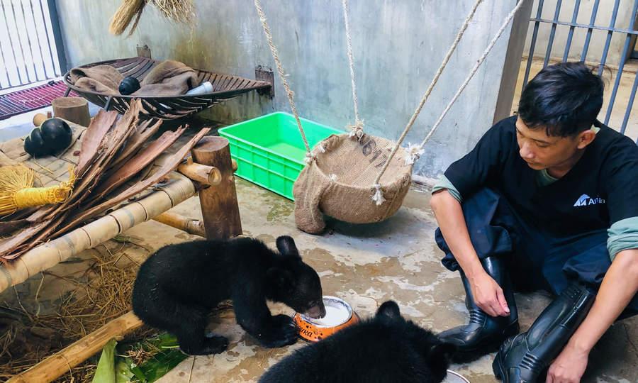 'Vú nuôi' của gấu con