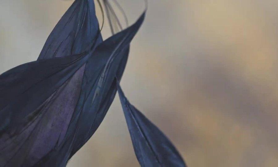 3.000 lông chim trang trí trên Rolls-Royce Phantom