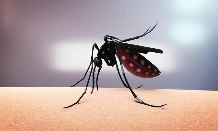 Mỹ sắp thả nửa tỷ muỗi biến đổi gene