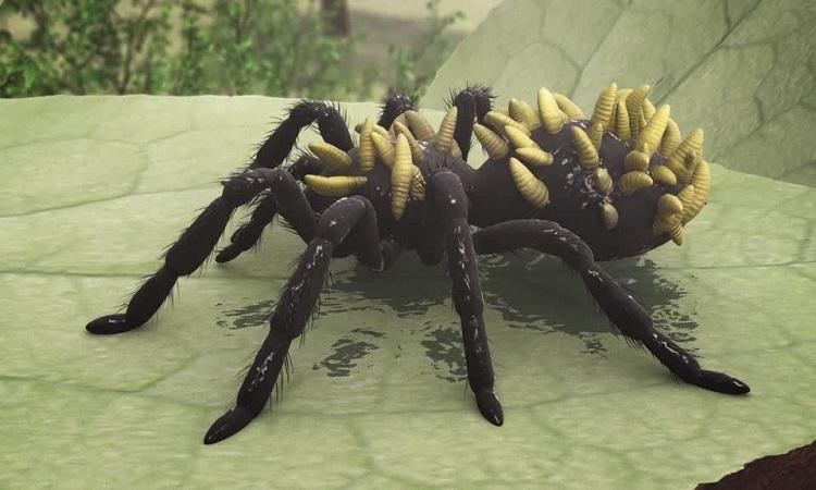 Phát hiện loài nhện độc mới ở Florida