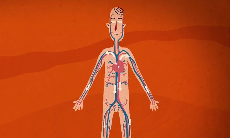 Hành trình phức tạp của oxy trong cơ thể